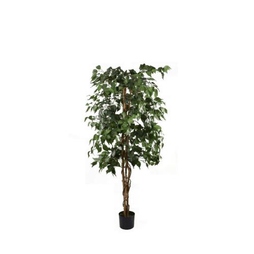 Ficus Tree Small